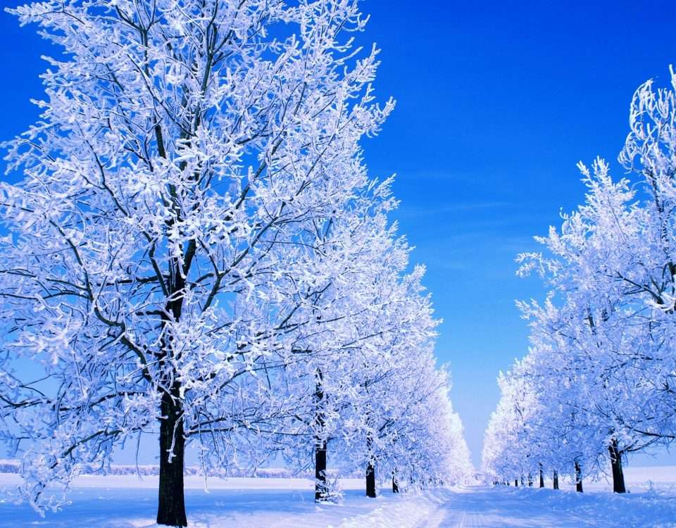 Winter_Icy_trees_and_winter_road_053976_