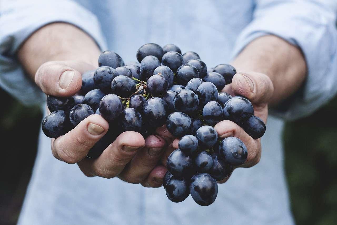 grapes-690230_1280